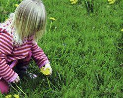 O que as plantas medicinais colheita em junho?